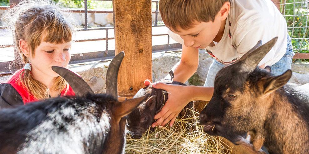 Wildparks & Zoos - Ausflugsziel im Salzburger Land
